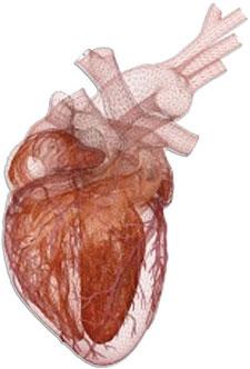 Virtual 3-D Heart Beats Using Actual Electrical Data | MDDI