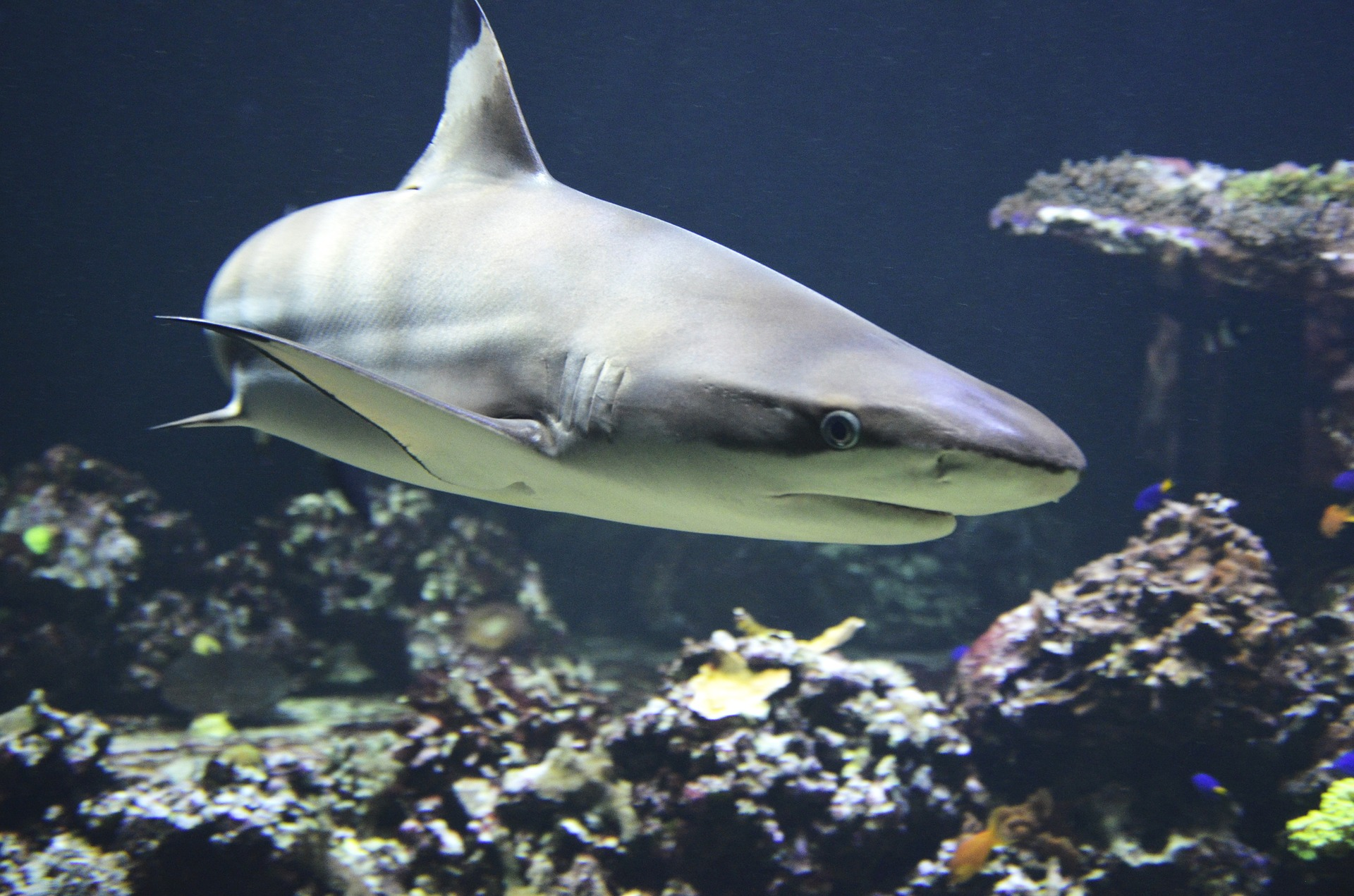 How Shark Skin Inspired an Antibacterial Surface Technology | MDDI