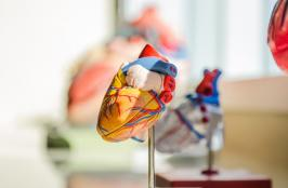 Abbott Wins Approval for CATALYST Trial for At-Risk Stroke Patients