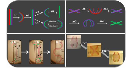 Are 4D Hydrogels the Shape of Things to Come in Tissue Engineering?