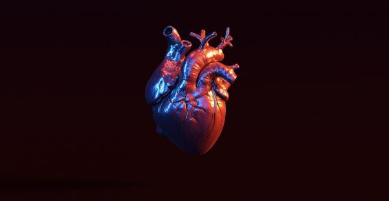 Want to Practice Surgery? Here's a Full-Scale 3D Printed Human Heart