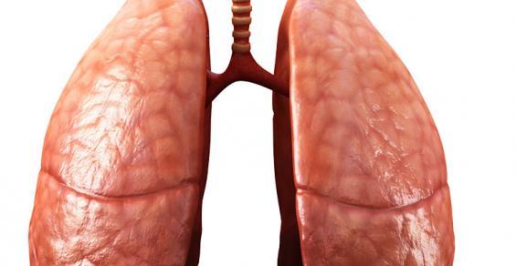 A Milestone in 3D-Printed Organs