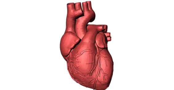 Cardiovalve Makes Crucial Move in TMVR Market