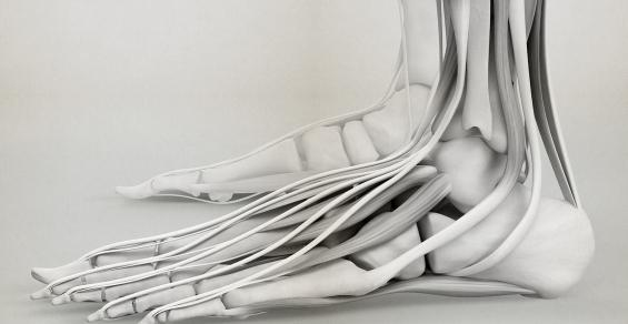 BellaSeno Evaluates Resorbable Polymer Technology for Tendon, Ligament Reconstruction