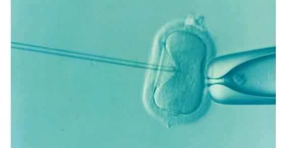 New AI-Powered Test Better Predicts Ongoing Pregnancy and Live Birth Rates in IVF Patients